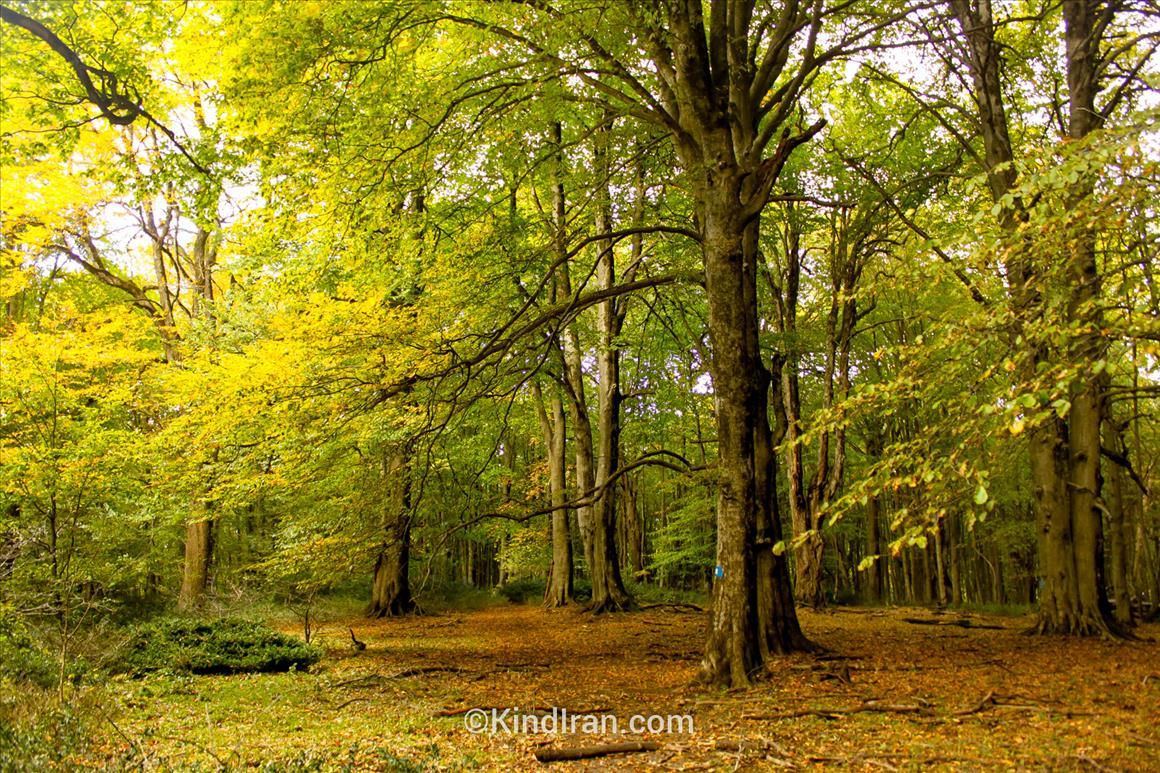 Alimistan Dream Forest