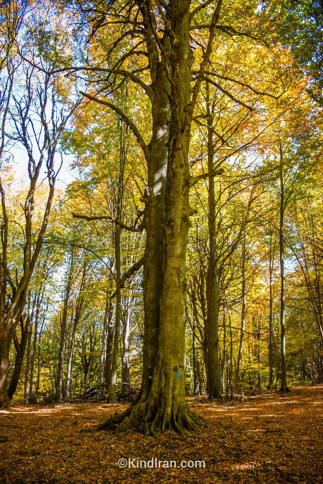 جنگل الیمستان؛ زیبایی به توان هزار