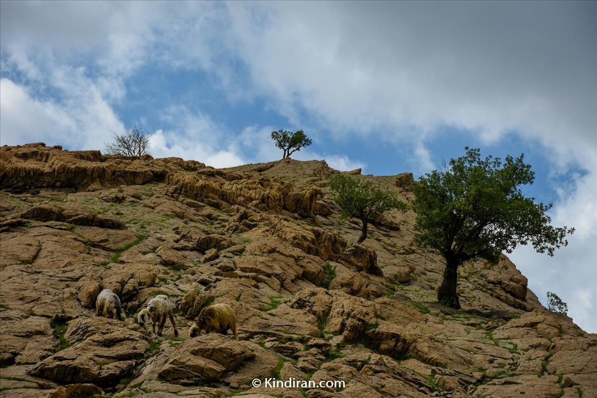 شِوی منحصرترین آبشار خاورمیانه