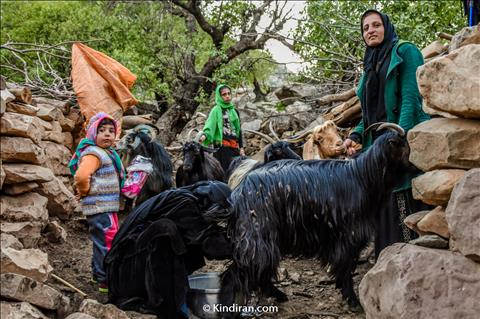 Bakhtiari nomads