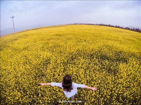 باغهای گل زرد