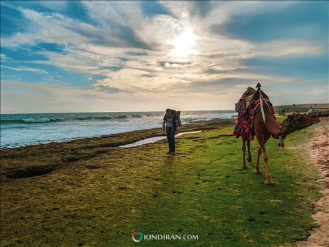 شتر سواری  و قدم زدن در ساحل دریا بزرگ چابهار