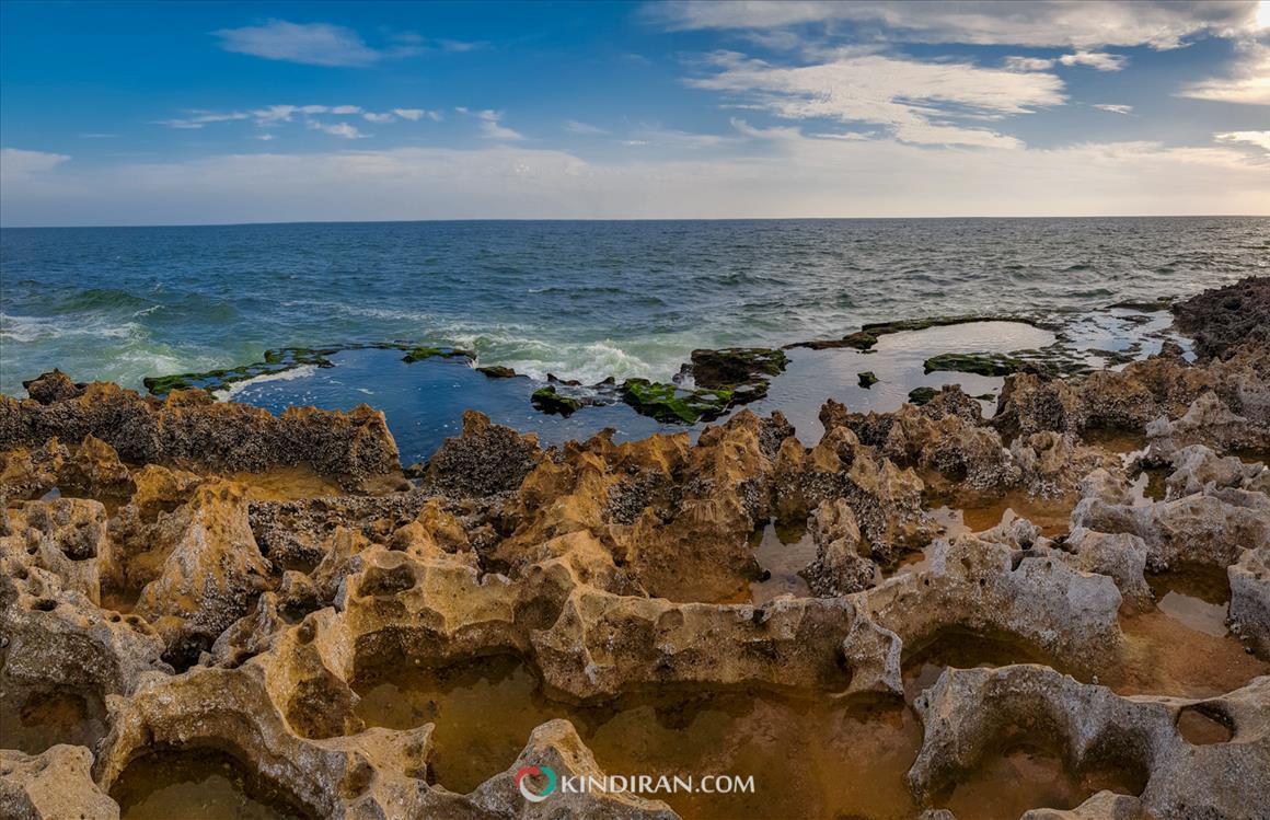 A moss-covered beach